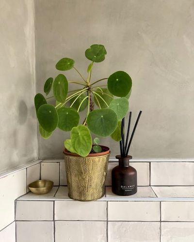 bagno cieco piante