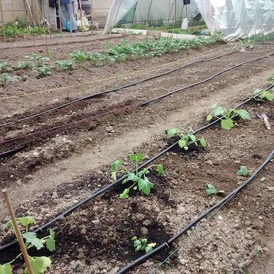 orto sinergico irrigazione a goccia