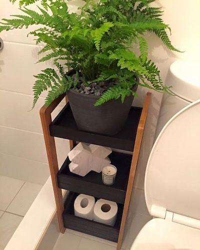 piante bagno cieco piccolo