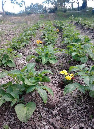 orto sinergico semine