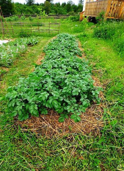 semine orto sinergico