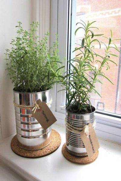 erbe aromatiche piante