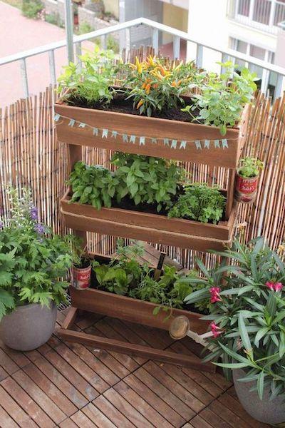 piante aromatiche caratteristiche