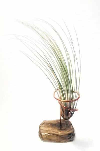 piante salutari