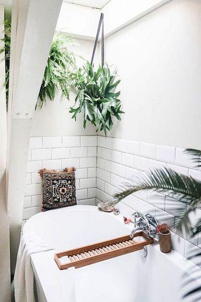 piante anti umidità bagno