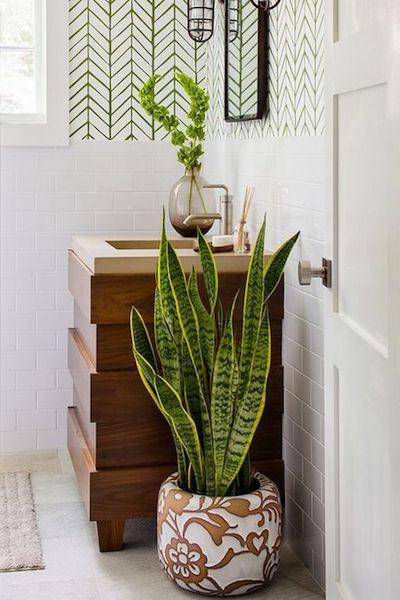 piante bagno contro umidità