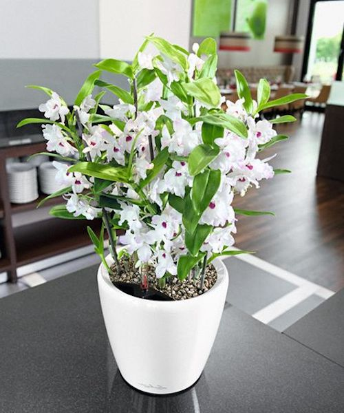 fioriere terracotta interni