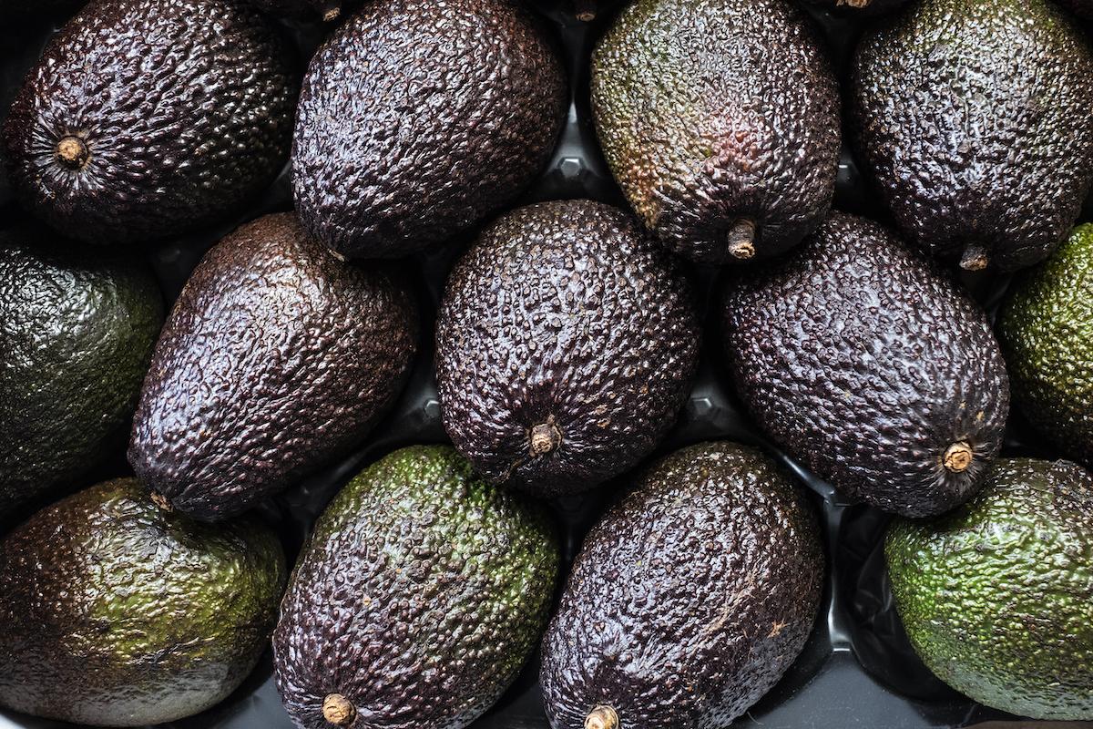 specie di avocado