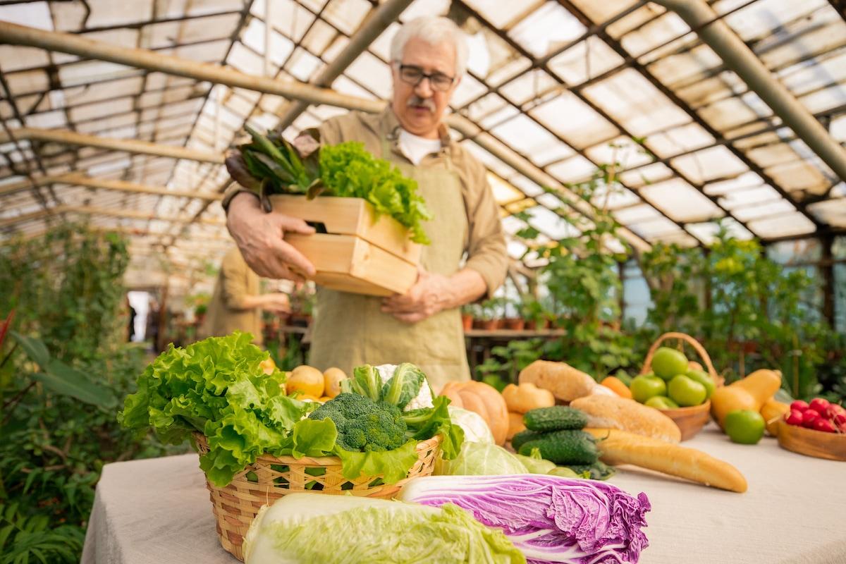 vantaggi serre per orto